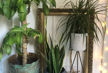 Urban jungle / Urban jungle, green home, house plants,