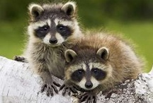 BABIES, TOTAL SQUEEE FACTOR!  / Babies, babies, babies! Too bad they grow up.  / by Barbi
