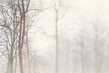wanderlust: lost in the fog