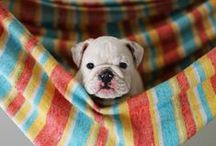 Cute Puppy Pics / The world's most adorable puppy pictures!
