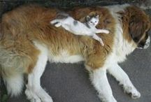 Funny Dog & Cat Pics / Hilarious pics of dogs & cats interacting in their awkward ways!