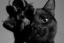 We Love Cats, Too!