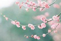 mood: spring feeling