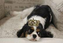 Luxurious Dog