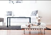 Dog Living Space