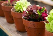 garden in a pot / by Carmen