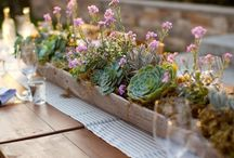 succulents :) / I just have a bit of an obsession. / by Carmen