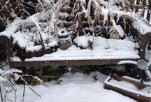 A Stroll Through My Garden ~ Winter / by Prim With Love