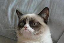 grumpy cat / by Carmen