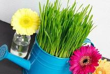 {Seasons} Spring & Easter Ideas