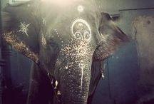 Everything elephant / by Sara Rosetta