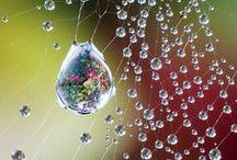 photo: spider net / Spider net photographs, macro, light, spider. photo