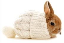 Cute Animals / by Jennifer Kidd