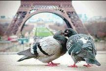 Pigeon / by Lachrisa Houchin