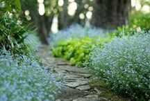 GROW [garden green]