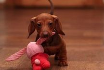 Animals and Pets / Cutest of the Cute Animals