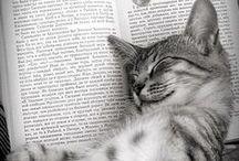KITTY CAT CATS / by Sue Howard