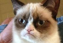<3 Grumpy Cat <3