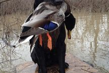 waterfowl,gamebird hunting / by Micheal