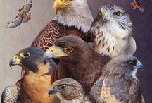 Birds of Prey / by Micheal