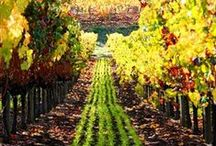 Beautiful Sonoma Wine Country / by Madrona Manor
