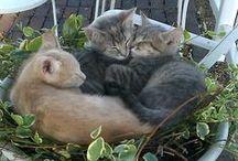 Cats!!!!!!! / Love, love, love !!! / by Suellen