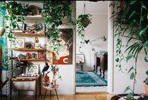HOME / by Chelsea Slaven-Davis