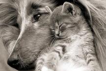 Sweet animals / by Nancy Brewer
