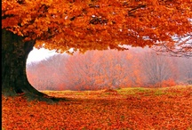 FALL / by Beverly Shade