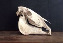 Bones / by Justine Dombrowski
