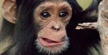 Opice / nevšedné druhy opíc