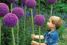 Garden ideas and design / by Paula Coley