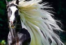 Cool Horses / Stunning horse breeds and color patterns - will knock your socks off.