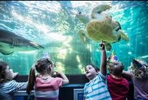kids  |  in Cape Town / places to go, stuff to do in and around the mother city