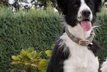 Hypoallergenic Dog Collars