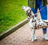 Hypoallergenic Dog Leashes