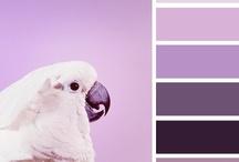 Color Inspiration / Color Palettes / by Shelia McCollough