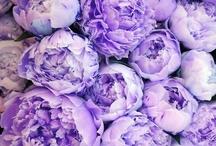 My Color of Choice / Purple PURPLE Purple / by Shelia McCollough