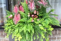 """Container Gardening """"Stunning"""" / Containers, planters, window boxes, combinations"""