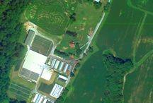 The Farm, The Greenhouses, / Farm, greenhouse production,
