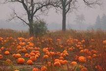 autumn love / by Megan Elizabeth