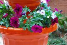 Spring - Gardening
