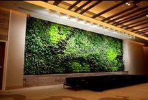 Green Walls; Living Walls / Green Walls, Interior, Exterior, Clean Air, Living Walls,