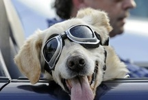 DOGS-R-COOL / They make the world a better place. / by Mike & Melissa Baucum