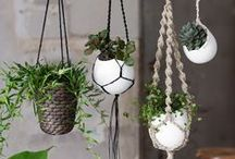 Hanging Botanicals / House plants, air plants, and living wall art.  / by Sow & Dipity