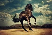 Horses / Just horses.