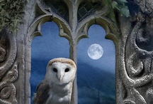 A touch of magic, mystery of night and art! / Folklore, mystery, beauty, art and imagination! / by Naxos Madden