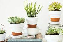 plants / plants, plants and more plants