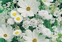 Flowers / by Camila Marcias