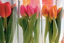 Spring Has Sprung / Spring Home Decor and Spring Holidays